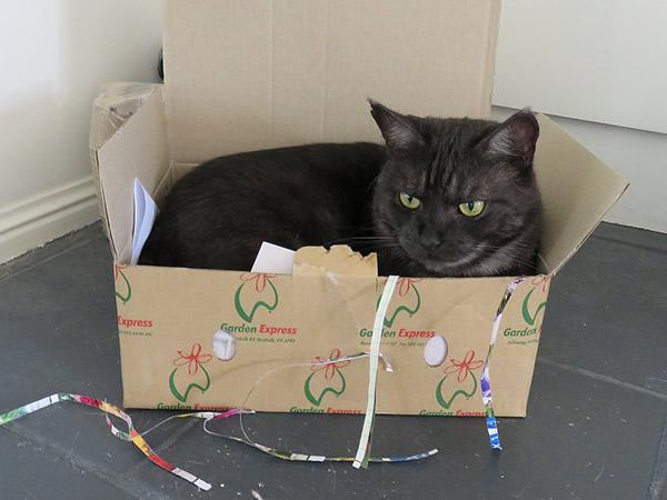 箱の中のミドン君