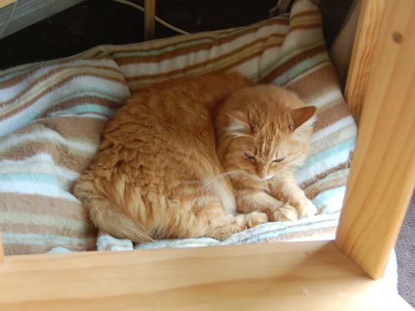 朝食後にキャットタワーの下の猫ベッドでうとうとするみったん