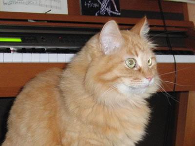 ピアノの椅子に座るみったん