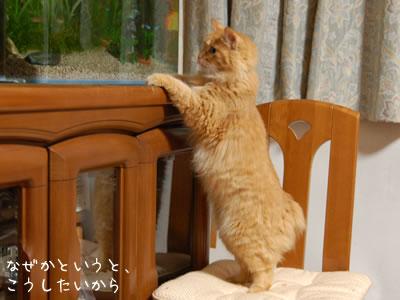 椅子に乗って水槽の中を覗くみったん