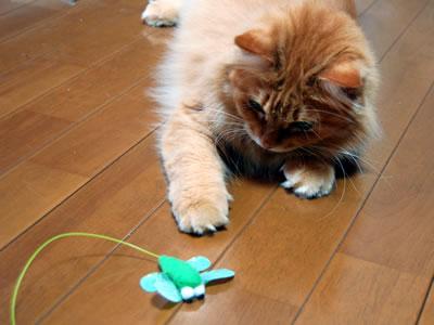 トンボのおもちゃを捕まえようとするみったん