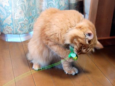トンボのおもちゃを捕まえたみったん