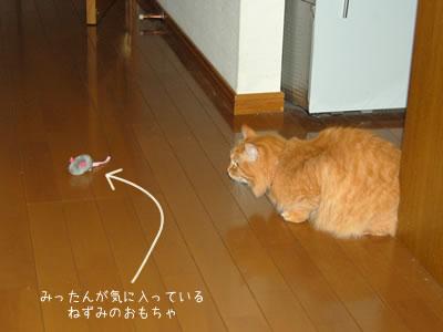ねずみのおもちゃを狙うみったん