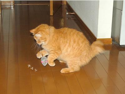 ねずみのおもちゃに飛びかかるみったん