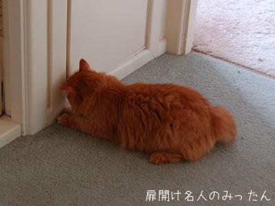 扉を開けようとしているみったん