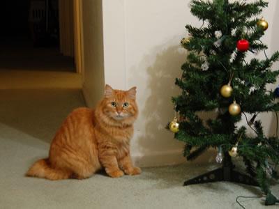 ご近所さんからいただいたクリスマスツリーを見るみったん