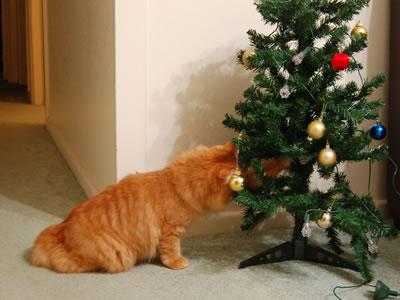 クリスマスツリーに頭を突っ込むみったん