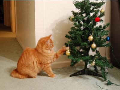 飾りのボールを猫パンチ
