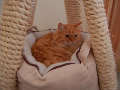 爪とぎの中にある猫ベッドにいるみったん