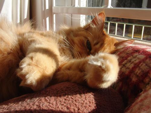 日向で寝転ぶみったん