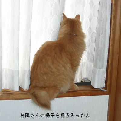 窓枠にのって、お隣さんの様子を見るみったん