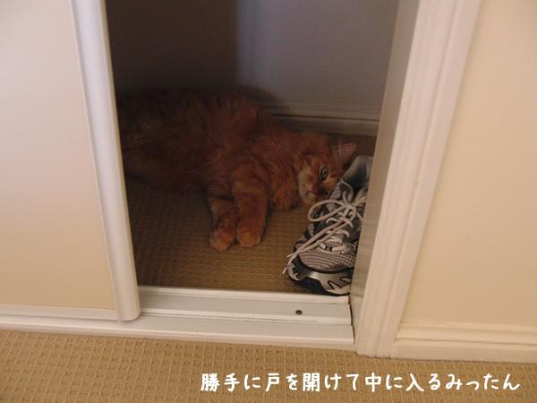 戸を開けてクローゼットの中で昼寝するみったん