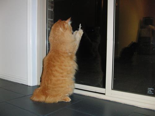 窓の向こうのトカゲを見るみったん