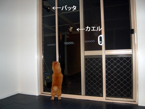 窓にはりついたカエルを見て台興奮のみったん