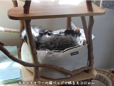 キャットタワーの上の猫ベッドで眠るモコにゃん