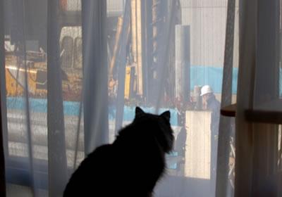 窓の外の工事を見物するモコにゃん