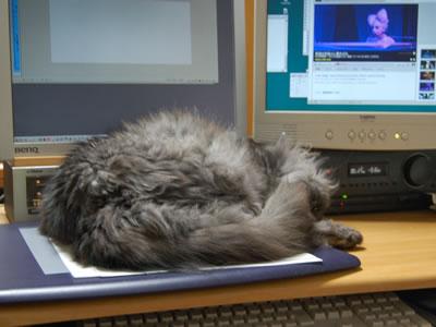 タブレットの上で眠るモコにゃん