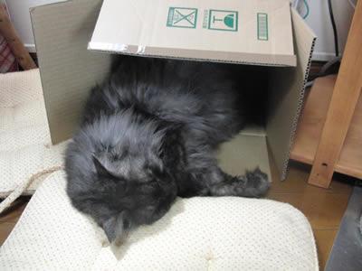 ダンボール箱にクッションを入れてもらって、気持ち良さそうに眠るモコにゃん