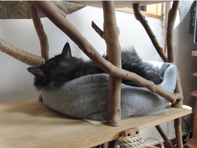 めずらしく猫ベッドに入ったモコにゃん