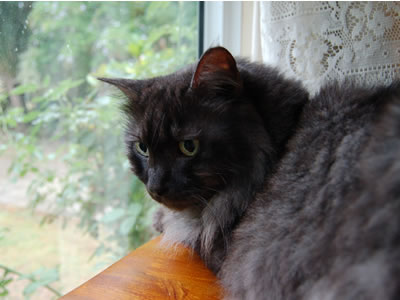 窓辺の椅子の上から外を眺めるモコにゃん