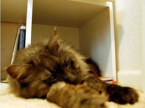 本箱からはみ出して寝ているモコにゃん