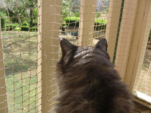 庭を見つめるモコにゃん