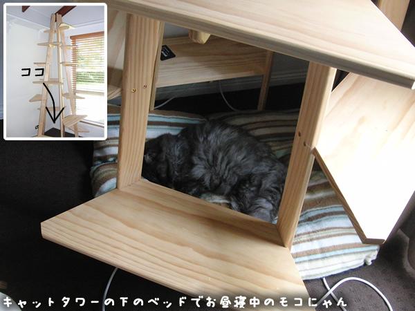 キャットタワーの下で昼寝中のモコにゃん