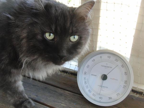 ベランダのモコにゃんと温度計