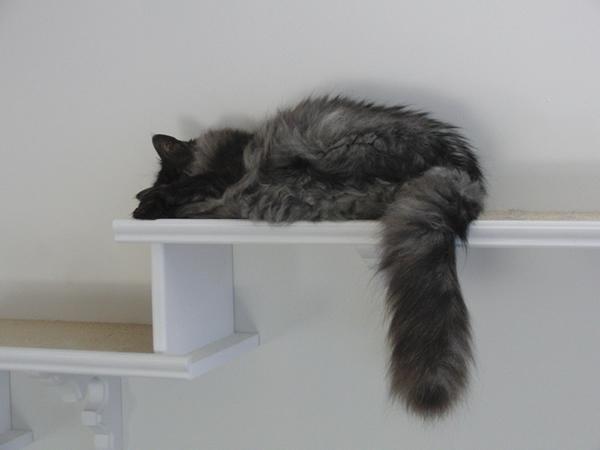 キャットウォークの上で昼寝をするモコにゃん