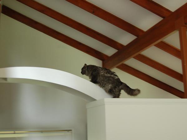 猫用橋の上のモコにゃん