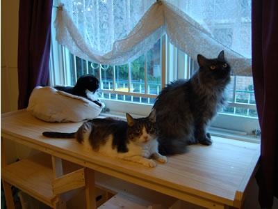 猫棚2の上の3匹、夕方の青い光の中で