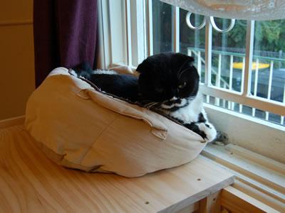 猫棚2の上のボク、クマにゃん