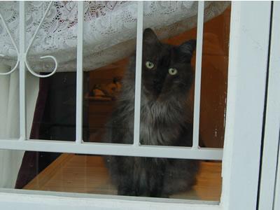 窓辺のモコにゃん