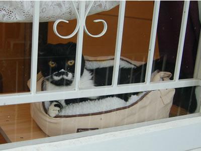 窓辺のボク(クマにゃん)