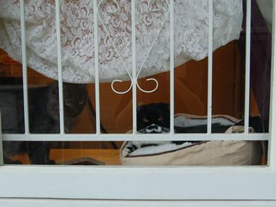 窓の外から見た猫棚の上のボクとモコにゃん