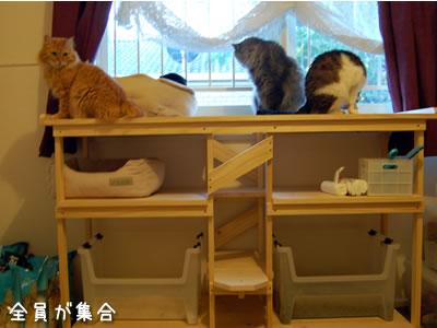 猫棚2に全員集合