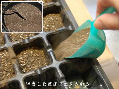土をフライパンで炒めて滅菌する