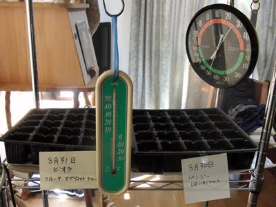 炒めた土を消毒した苗床に入れ、そこに種をまく