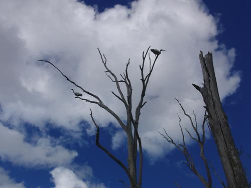 青空に白い雲。木の枝には野鳥。