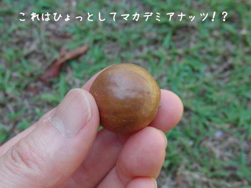 庭で見つけた丸いもの