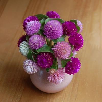 小さな花瓶に千日紅の花を飾る