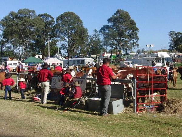 農業際の牛の品評会