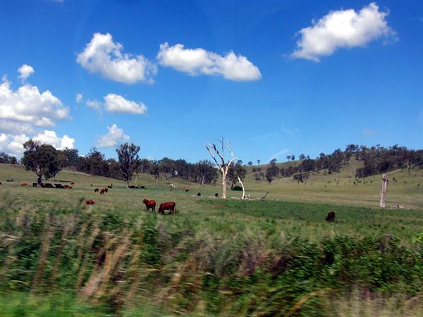 広がる草原地帯
