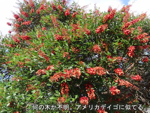 赤い花が咲く街路樹
