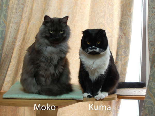 Moko-Nyan
