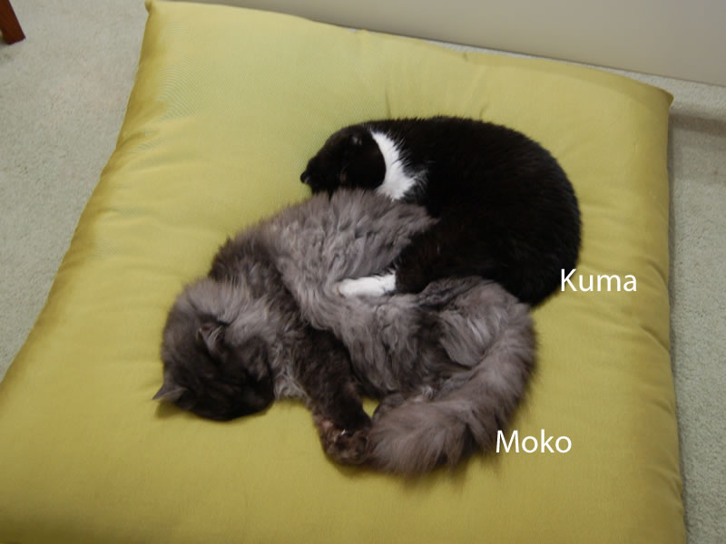 Moko-Nyan and Kuma