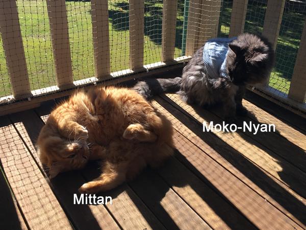 Moko-Nyan and Mittan