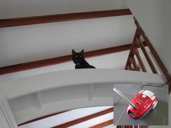 Midon on the cat bridge