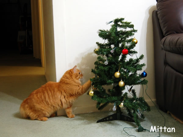 Mittan paying with the Christmas Tree