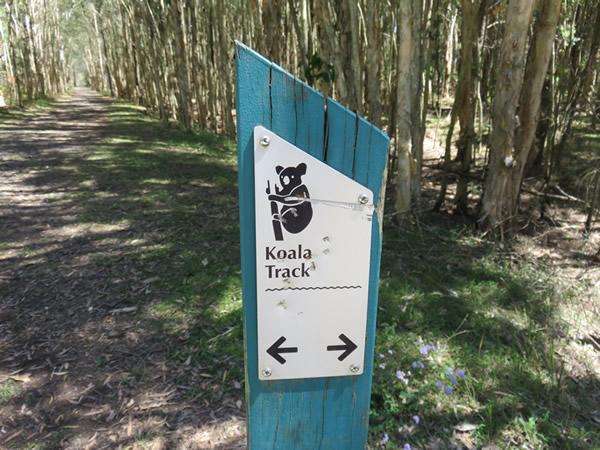 Koala Track